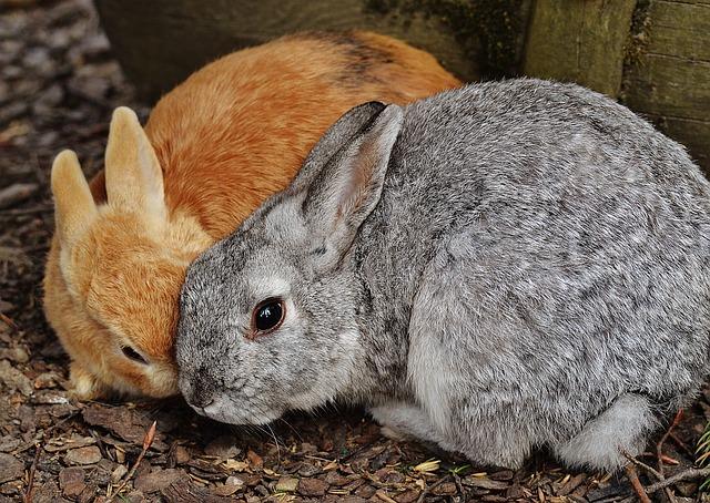 rabbit-1312574_640